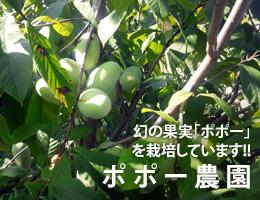 幻の果実「ポポー」を栽培しています!!